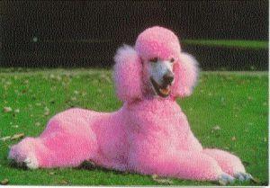 rosapudel