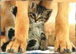 kattungen