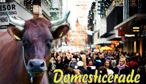 domesticerat