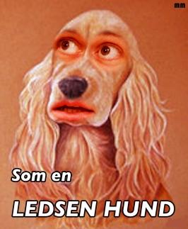 ledsenhund